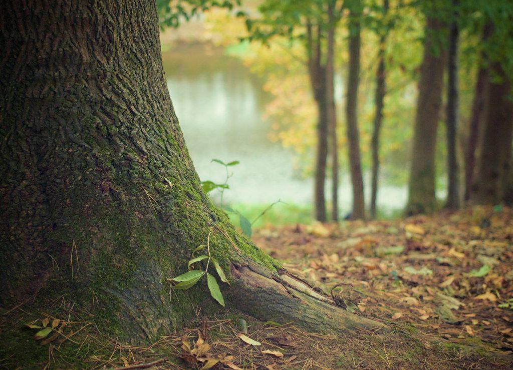 Radici albero principi dello yoga